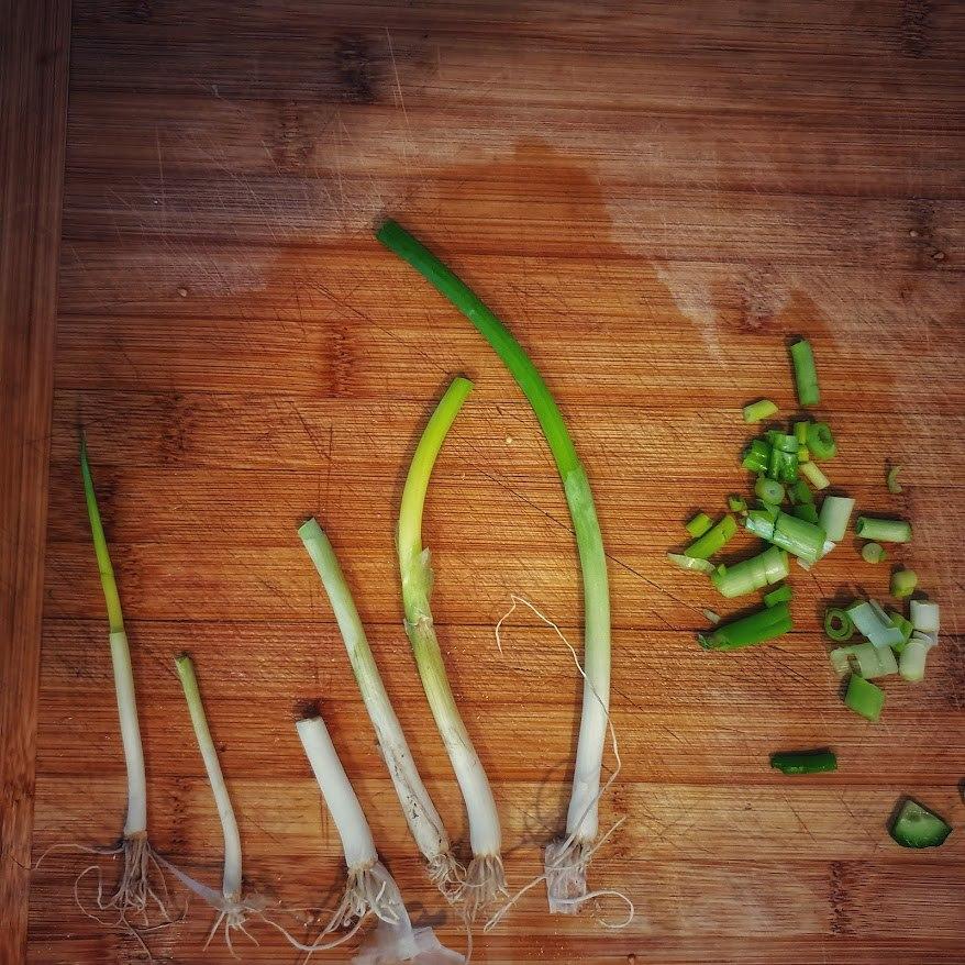 הכנת בצל ירוק לשתילה
