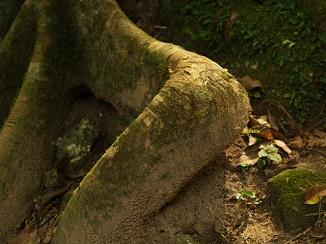עצית שפגשתי בג'ונגל בגואטמלה