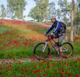 רוכב אופניים בלב שדה כלניות ביער שוקדה